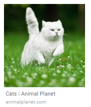 cat picture pulling caption from title tag